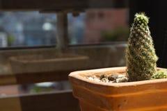 Cacto verde na tabela de café da manhã no potenciômetro de flor foto de stock