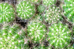 Cacto verde no acima-direito no quadro (foco selecionado) fotografia de stock