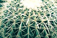 Cacto verde no solo de potting com espinhos longos imagem de stock royalty free