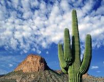 Cacto y nubes Foto de archivo libre de regalías