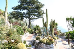 Cactus garden. In Eze France Royalty Free Stock Image