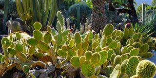 Cactoo Garten Stockfotografie