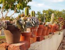 Cactoo ogród Obraz Royalty Free