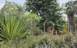 Cactoo ogród zdjęcia stock