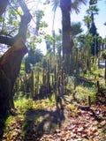 Cactoo trädgård Arkivfoton