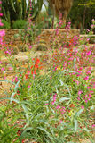 Cactoo trädgård Arkivbild