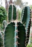 Cactoo trädgård royaltyfri fotografi