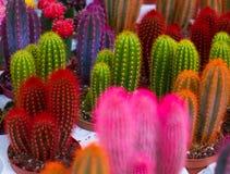 Cactos coloridos incomuns imagens de stock royalty free