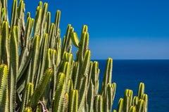 Cactos de Gran Canaria imagem de stock