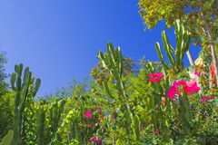 Cactos e flores em um parque - Antalya, Turquia imagens de stock