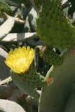 Cactos e outras plantas suculentos Imagem de Stock