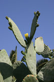 Cactos e outras plantas suculentos Fotografia de Stock Royalty Free