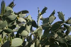 Cactos e outras plantas suculentos Fotos de Stock