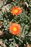 Cactos e outras plantas suculentos Imagens de Stock Royalty Free