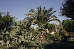 Cactos e outras plantas suculentos Imagens de Stock
