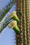 Cactos e outras plantas suculentos Foto de Stock Royalty Free
