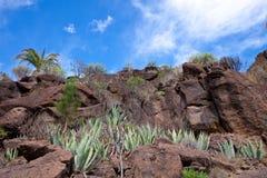 Cactos en el medio de la roca Fotos de archivo libres de regalías