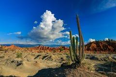 Cactos grandes no deserto vermelho Imagem de Stock