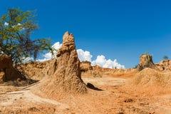 Cactos grandes no deserto vermelho, deserto do tatacoa, Colômbia, latino amer Foto de Stock Royalty Free