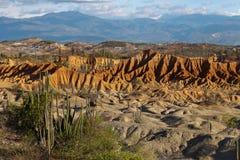 Cactos grandes no deserto vermelho, deserto do tatacoa, Colômbia, latino amer Foto de Stock