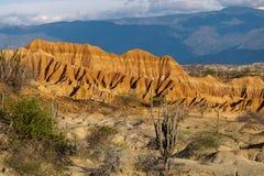 Cactos grandes no deserto vermelho, deserto do tatacoa, Colômbia, latino amer Fotografia de Stock
