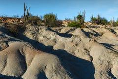 Cactos grandes no deserto vermelho, deserto do tatacoa, Colômbia, latino amer fotos de stock
