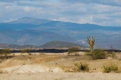 Cactos grandes no deserto vermelho, deserto do tatacoa, Colômbia, latino amer fotografia de stock royalty free