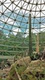 Cactos na exibição do deserto no jardim zoológico do NC fotos de stock
