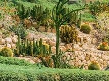 Cactos na flora do jardim botânico de Ein Gedi imagem de stock royalty free