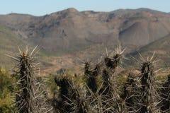 Cactos no deserto de Atacama no Chile imagem de stock royalty free