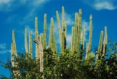 Cactos no deserto de Tatacoa Fotos de Stock