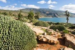 Cactos no EL Ouidane do escaninho da barragem do lago, Marrocos imagens de stock