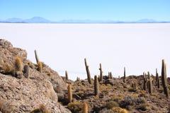 Cactos no Isla del Pescado Foto de Stock Royalty Free