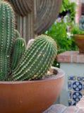 Cactos no potenciômetro que decora uma rua em Oldtown, Scottsdale Imagens de Stock Royalty Free