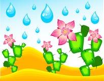 Cactos que florecen bajo la lluvia Imagen de archivo libre de regalías