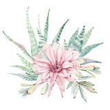 Cactos tirados mão do saguaro da aquarela Imagens de Stock