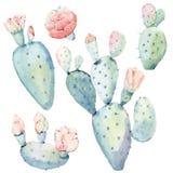 Cactos tirados mão do saguaro da aquarela Imagens de Stock Royalty Free