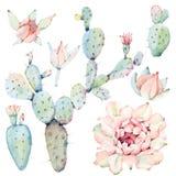 Cactos tirados mão do saguaro da aquarela Fotos de Stock Royalty Free