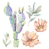 Cactos tirados mão do saguaro da aquarela Fotografia de Stock