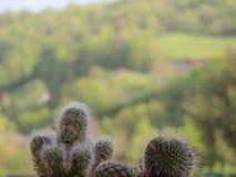 Cactus à l'arrière-plan de montagne photographie stock libre de droits