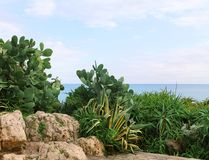 Cactus, áloe, rocas, mar, día de verano ilustración del vector
