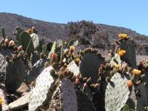 Cactus épineux image libre de droits
