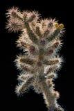 Cactus épineux Photographie stock libre de droits