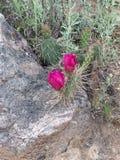 Cactus épineux de désert Photographie stock libre de droits