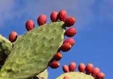 Cactus épineux de paires photographie stock libre de droits