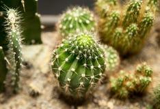 Cactus épineux vert dans la maison Photos libres de droits