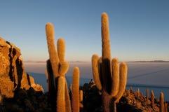 Cactus, île d'Incahuasi Image libre de droits