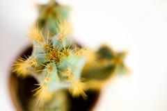 Cactus 03 Photographie stock libre de droits