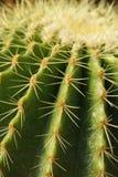 Cactus 1 Fotografia Stock Libera da Diritti
