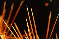 Cactus #1 (détails élevés de contre-jour d'une rotation) Photographie stock libre de droits